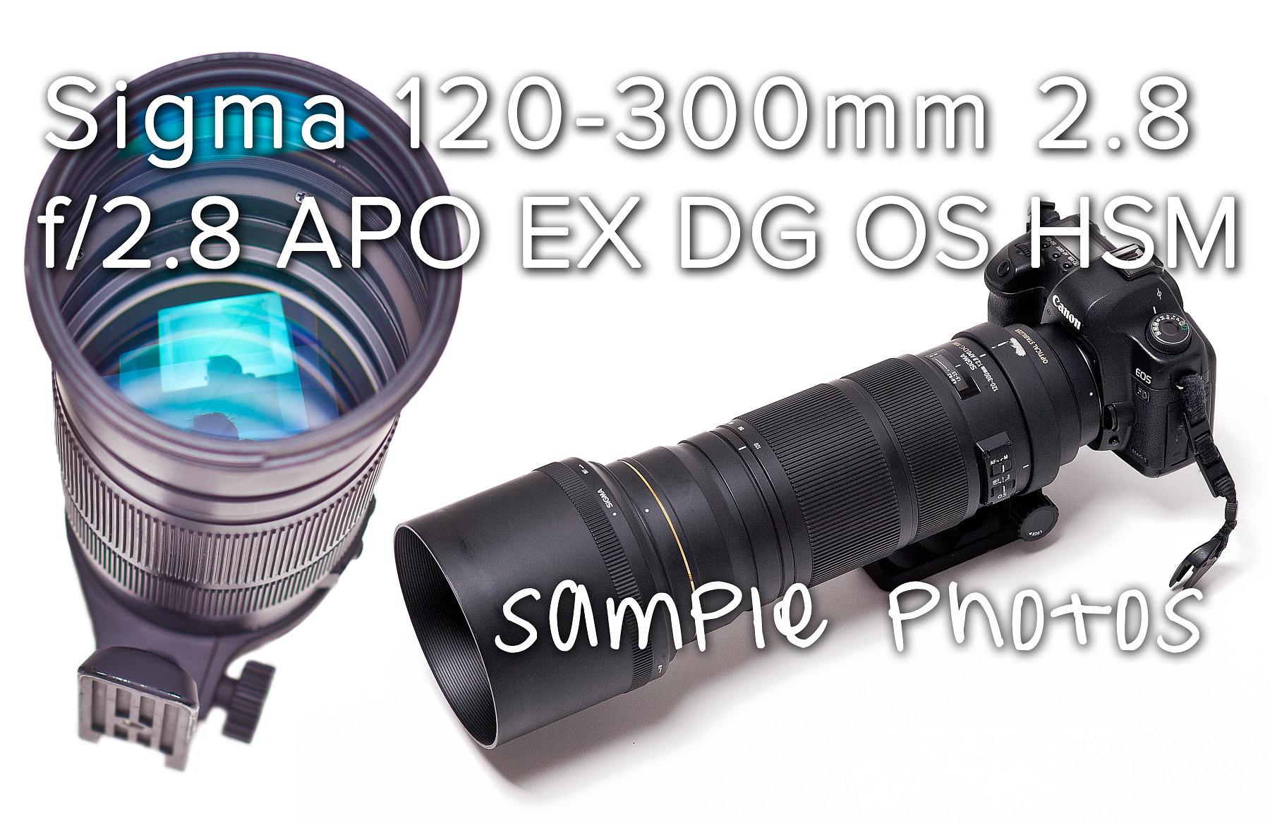 Zdjęcia testowe (51): Sigma 120-300 mm  f/2.8 APO EX DG OS HSM  + Canon 5D Mark II . sample