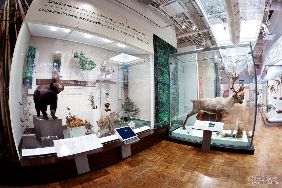 Toronto-Royal-Ontario-Museum-ROM-pictures-IMG_0514