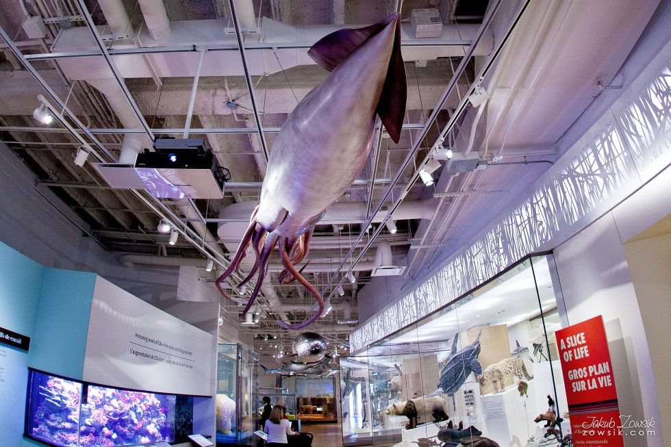 Toronto-Royal-Ontario-Museum-ROM-pictures-IMG_0526