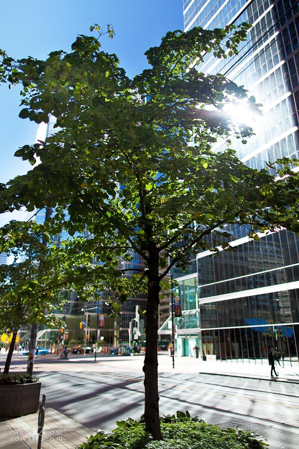 Toronto-picture-5dmk2-IMG_0044
