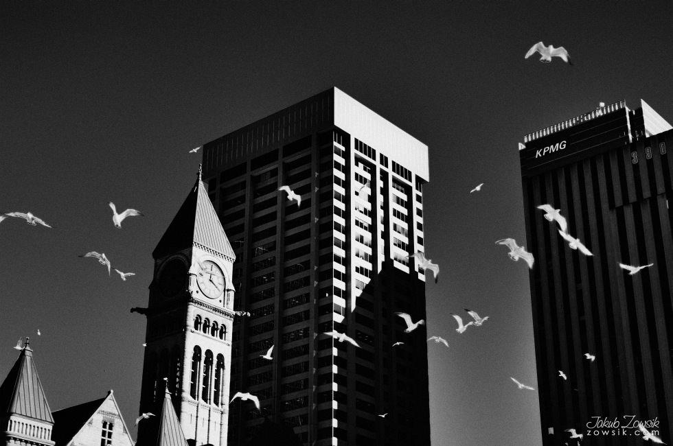 Toronto-picture-5dmk2-IMG_0266