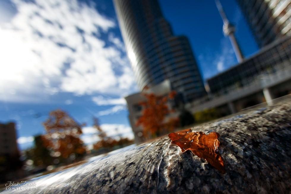 Toronto-zdjecia-IMG_0995