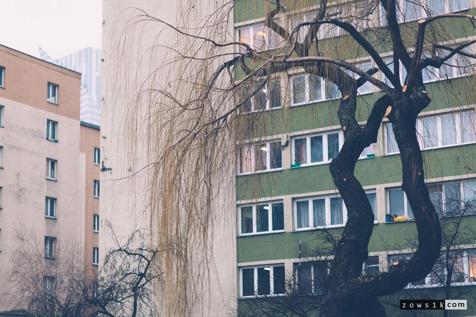 Lazy-on-Warsaw-2-IMG_9014