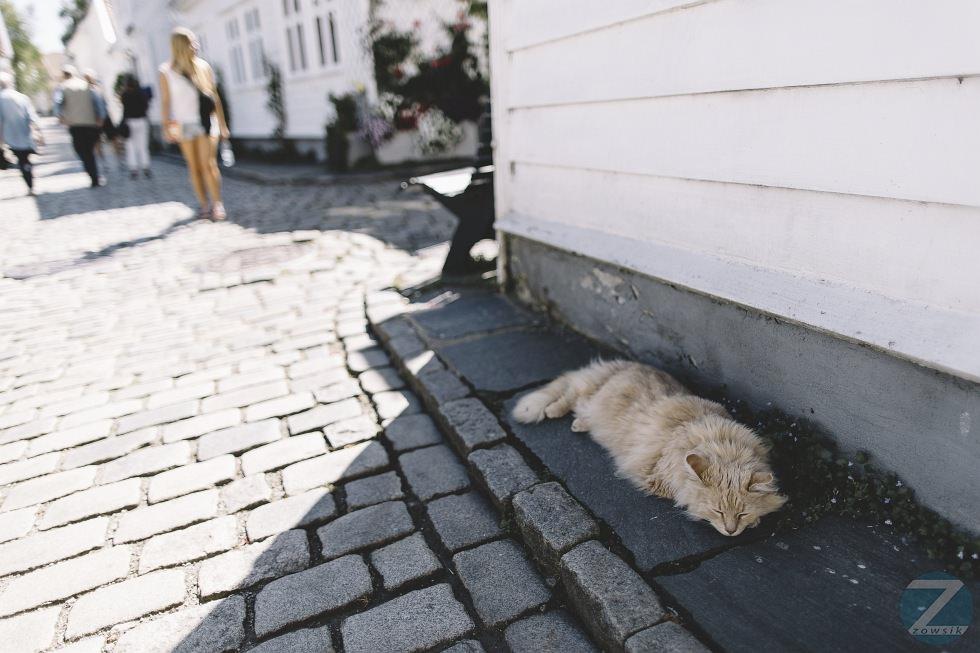 Leisure Time In Stavanger IMG_1607