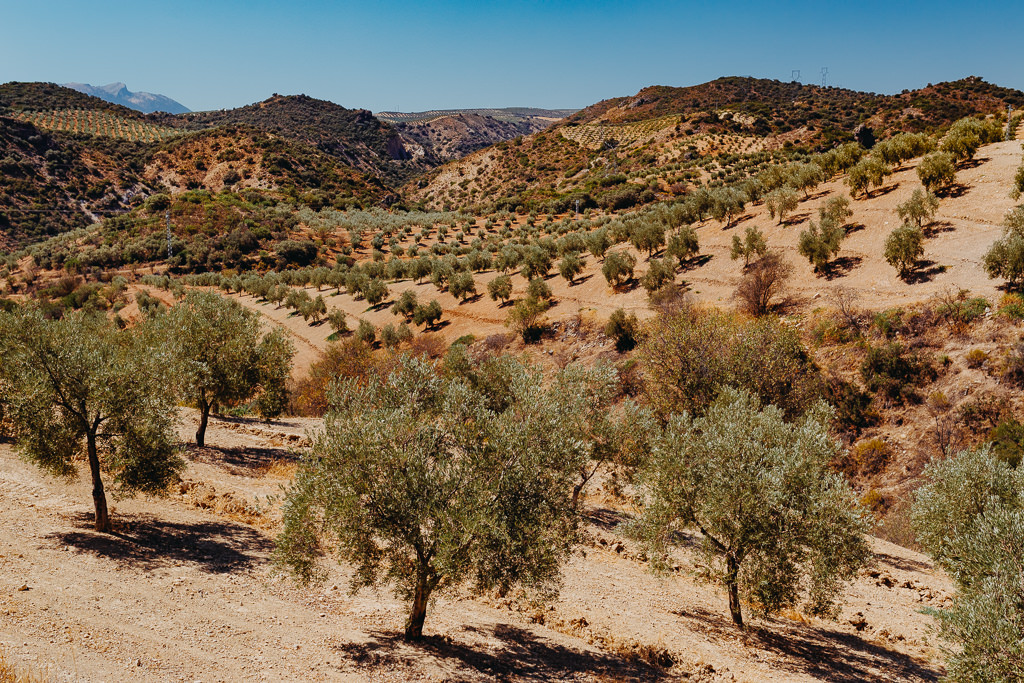 #16 Leisure Time In ... Hiszpania | Andaluzja (Malaga, Ronda, Benalmadena) | Gibraltar 15