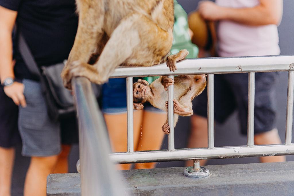 #16 Leisure Time In ... Hiszpania | Andaluzja (Malaga, Ronda, Benalmadena) | Gibraltar 92